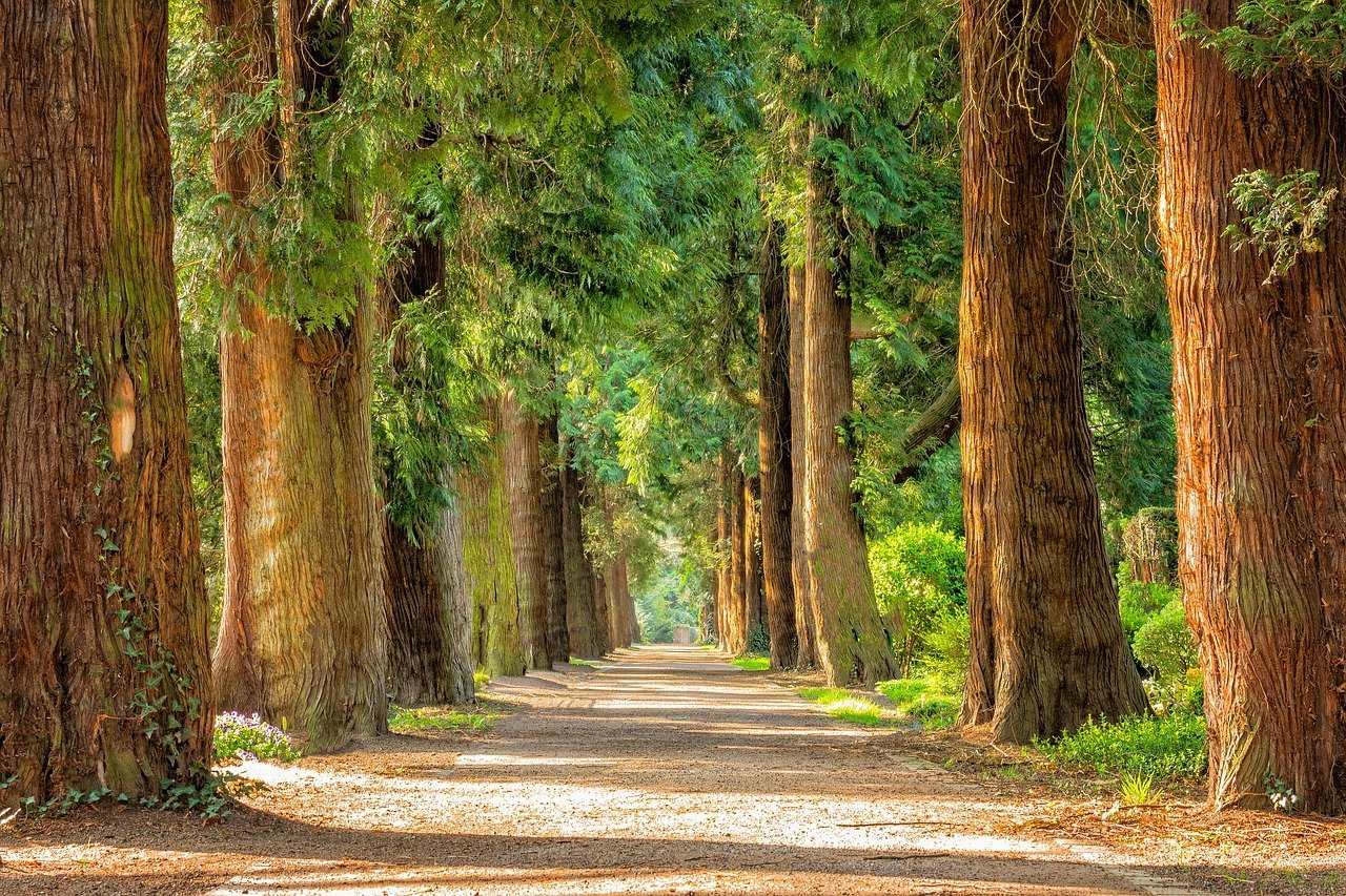 Forest of Trees Representing the Promise of Guaranteed Lifetime Income of Annuities